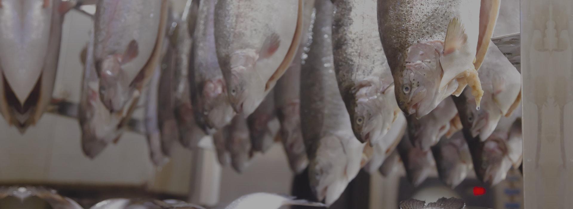hanged smoked fish